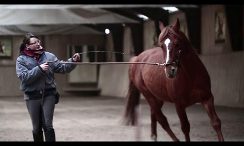 schiefes Pferd...